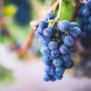 Fruto de uva morada. Foto de Amos Bar-Zeev en Unsplash