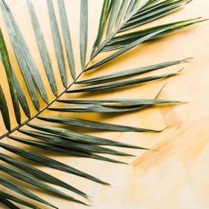 Foto de una rama de palma por Brooke Lark en Unsplash