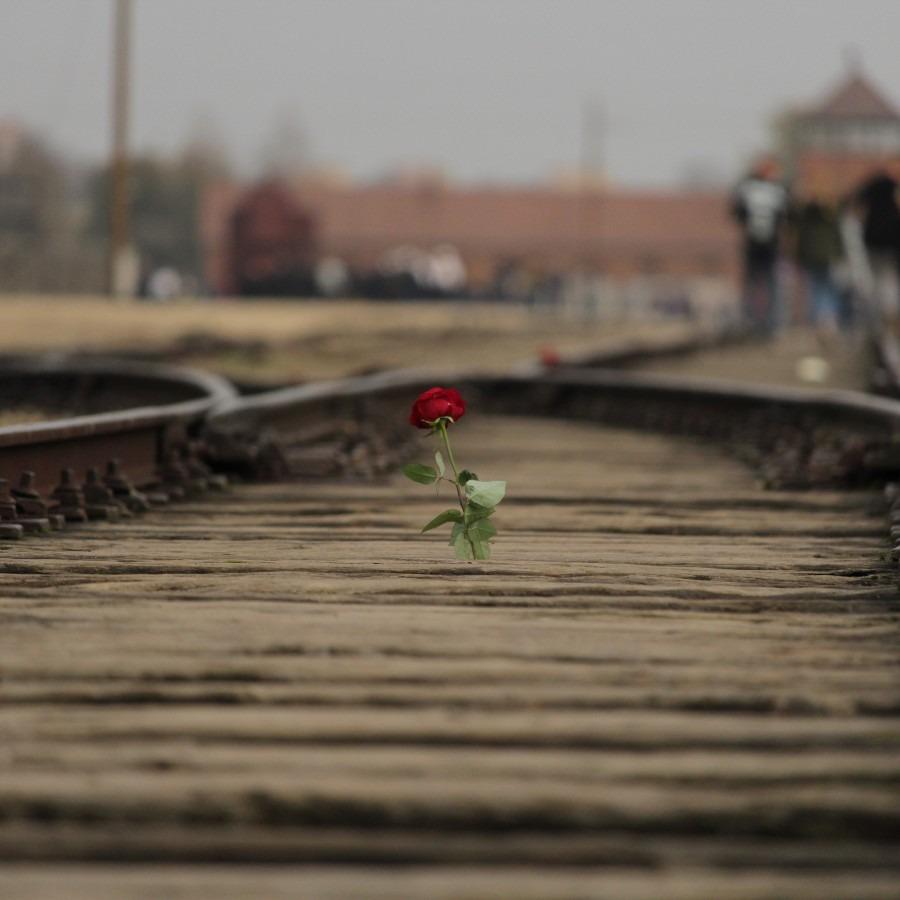 A rose coming up through train tracks.