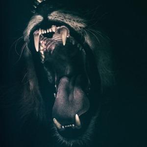 Imagen de un león enojado por Ian Lindsay de Pixabay
