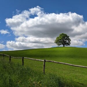 A tree on a hill in a green pasture with a wooden fence.