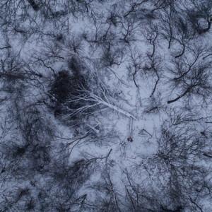 Vista aérea de un bosque nevado de árboles muertos.