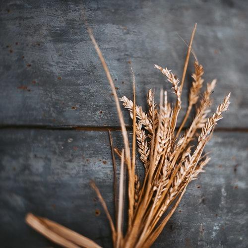 Imagen de trigo sobre madera