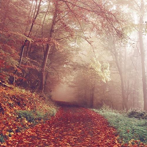 bosque brumoso con un camino. Crédito de la foto: Sebastian Unrau de unsplash.com