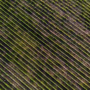 Foto del cultivo de campo por Michael Cragg en Unsplash