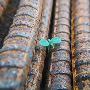 Foto de brotes verdes que crecen entre barras de Faris Mohammed en Unsplash