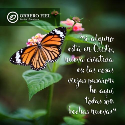 Foto de una mariposa en una flor de Daniel Klein en Unsplash