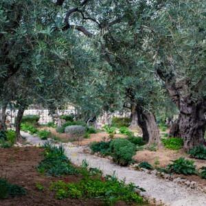 Foto de un camino cerca de Jerusalén por Stacey Franco en Unsplash