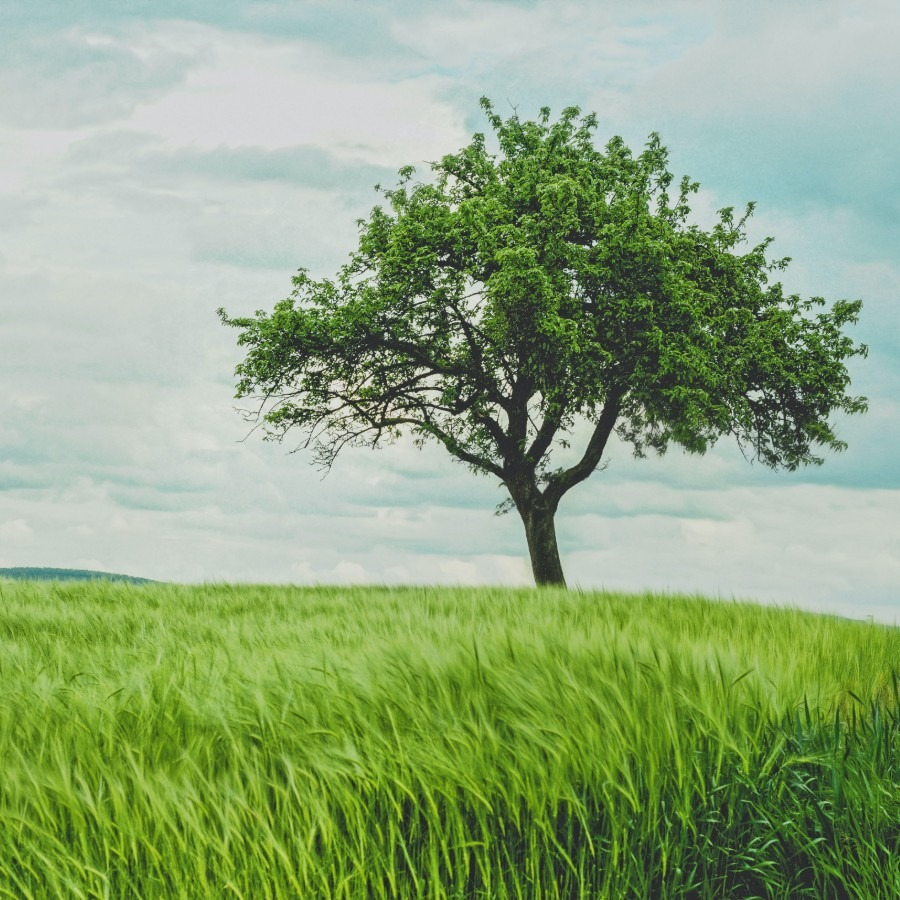 Foto de un árbol Foto de Johann Siemens en Unsplash