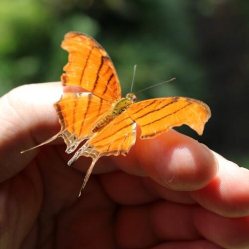 Foto de una mariposa en una mano por Stefany Andrade en Unsplash