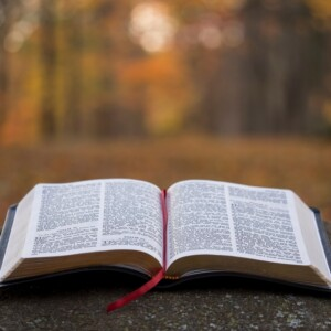 open Bible in a wooded area