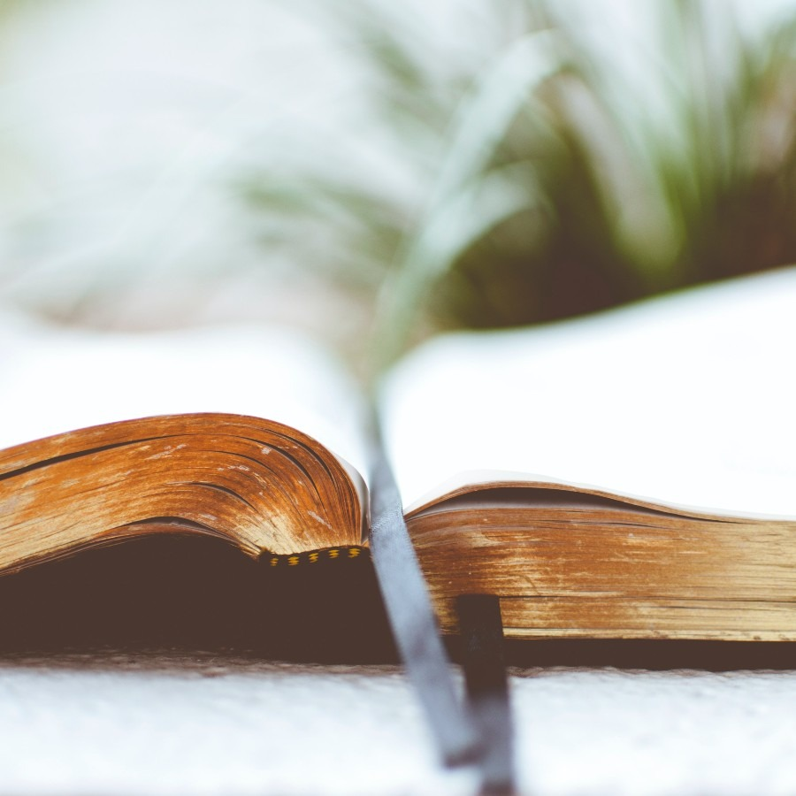 open Bible with green plant
