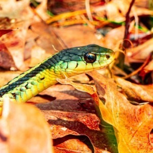 Foto de serpiente en hojas de otoño de Oliver Fetter en Unsplash